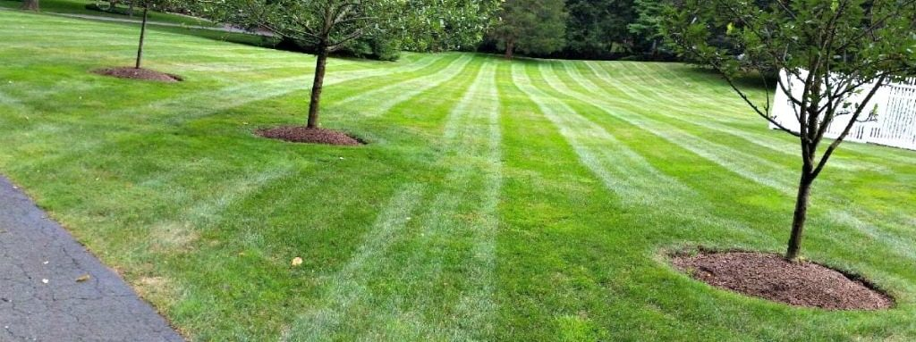 Landscaping services lawn mowing lawn care new canaan for Lawn mowing and gardening services